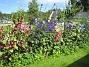 Bakgården  2013-07-20 IMG_0099