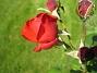 IMG_0047  2013-08-27 IMG_0047