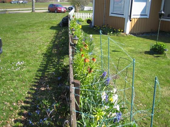 Granudden Det är så grönt och fint och det har redan börjat blomma en massa av mina vackra lökväxter. 2014-04-20 IMG_0005 Granudden Färjestaden Öland