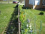 Det är så grönt och fint och det har redan börjat blomma en massa av mina vackra lökväxter. (2014-04-20 IMG_0005)