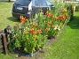 Liljor vid staketet  2014-07-06 IMG_0012