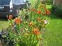 Liljor vid staketet  2014-07-06 IMG_0013
