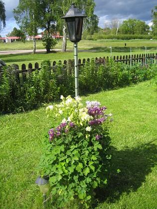 Akleja { Mitt på gräsmattan sitter mina kamerastolpar och vid foten av dessa finns lite olika växter. }