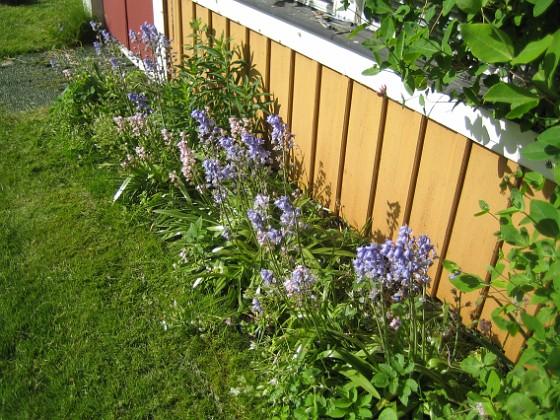 Altanen Ytterligare en bild av planteringen vid Altanen.&nbsp 2015-05-30 IMG_0054 Granudden Färjestaden Öland
