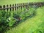 Akleja Längre bort längs staketet har jag en plantering med Studentnejlika, Praktriddarsporre och Akleja. 2015-05-30 IMG_0009