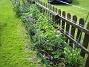Akleja Samma  plantering men sedd från andra hållet. 2015-05-30 IMG_0010