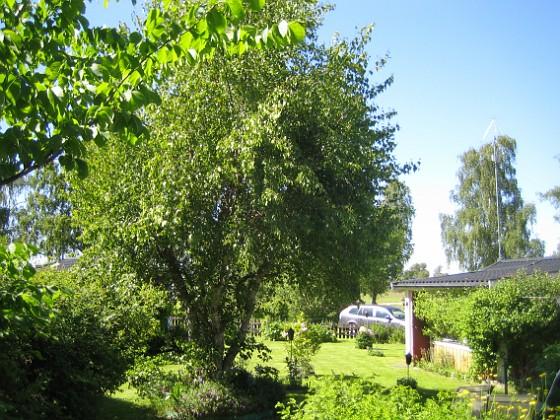 Björken &nbsp 2015-06-05 IMG_0115 Granudden Färjestaden Öland