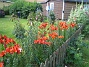 Liljor  2015-07-19 Liljor_0028
