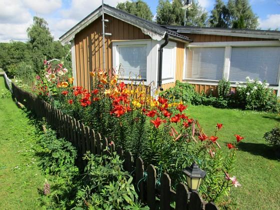 Liljor                                Liljorna är iögonfallande även utifrån sett.&nbsp 2015-07-28 Liljor_0012 Granudden Färjestaden Öland