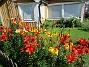 I år har det mest varit röda Liljor. Jag hade ursprungligen en mängd olika varianter men variationen har minskat för varje år.  (2015-07-28 Liljor_0013)