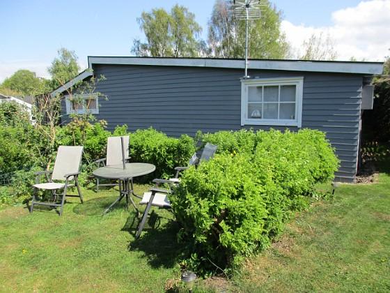 Denna häcken kommer att bli väldigt vacker i år. 2016-05-14 Uteplatsen_0050 Granudden Färjestaden Öland
