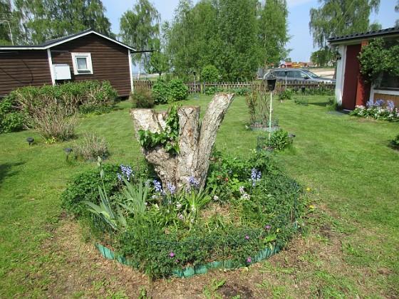 Björken                                 2016-05-22 Björken_0062 Granudden Färjestaden Öland