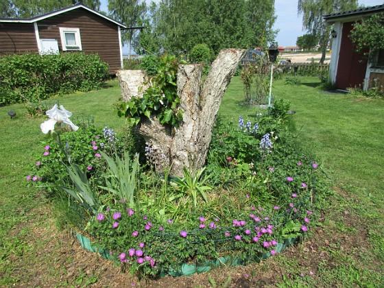 Björken                                &nbsp 2016-05-29 Björken_0026 Granudden Färjestaden Öland