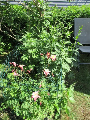 Pastellakleja                                &nbsp 2016-06-05 Pastellakleja_0052 Granudden Färjestaden Öland