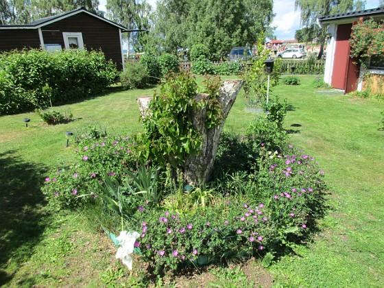 Blodnäva                                &nbsp 2016-06-11 Blodnäva_0019 Granudden Färjestaden Öland