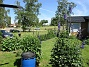 (2016-06-22 Trädgårdsriddarsporre_0041)