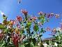Kaprifol Notera den lilla insekten i överkant :-) 2016-07-10 Kaprifol_0004