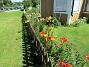 Liljor Jag har också skubbat staketet, vilket inte syns här. 2017-07-28 Liljor_0055