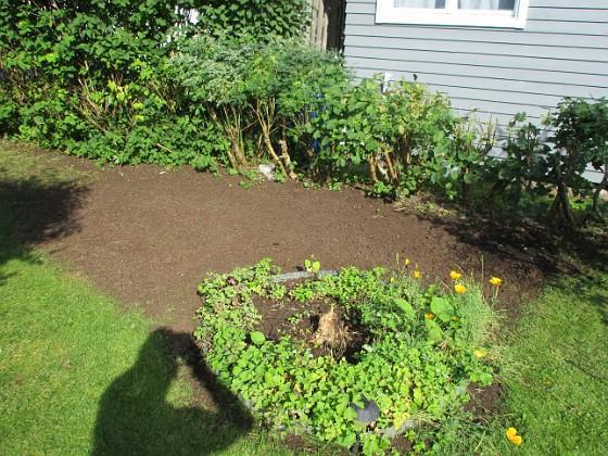 Det ser inte så vackert ut just nu. Men här fanns tidigare två krusbärsbuskar och en massa Rabarber - som jag nu tagit bort. Jag har lagt på jord och sått gräs här istället. 2017-08-08 IMG_0026 Granudden Färjestaden Öland