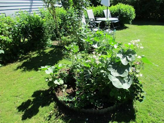 Här har jag satt lite av varje. Tanken var Trädgårdsriddarsporre, där jag för många år sedan satte ut plantor som jag drivit upp från frö. Av dessa är endast en kvar dessvärre, och jag har i år kompletterat med nya plantor. Stockrosorna har hamnat där genom självsådda frön. Jag har även tagit frö från mina Akleja och strött ut här. 2018-06-05 IMG_0028 Granudden Färjestaden Öland