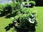 IMG_0028 Här har jag satt lite av varje. Tanken var Trädgårdsriddarsporre, där jag för många år sedan satte ut plantor som jag drivit upp från frö. Av dessa är endast en kvar dessvärre, och jag har i år kompletterat med nya plantor. Stockrosorna har hamnat där genom självsådda frön. Jag har även tagit frö från mina Akleja och strött ut här. 2018-06-05 IMG_0028