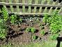 Liljor Liljor har jag här haft sedan 2006. Men för varje år så är det någon eller ett par som dött, och till slut har det blivit ganska glest och mest röda orientalliljor samt några enstaka Basunliljor. I år så röjde jag ogräs ganska ordentligt och fann att det hade blivit ännu glesare. Så jag beställde i början av maj lite knölar, som har börjat växa men som kanske inte blommar i år.                                2018-06-05 Liljor_0051