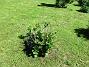 Hortensia_0048 Hortensia 2019-06-14 Hortensia_0048