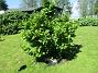 Magnolia_0035       Magnolia                          2019-06-14 Magnolia_0035