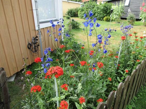 Blommor                                 2019-07-10 Blommor_0010 Granudden Färjestaden Öland