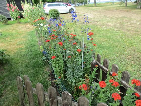Blommor                                 2019-07-10 Blommor_0145 Granudden Färjestaden Öland