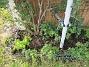 Här finns som vanligt en hel del Akleja. Här har jag även sått Underblomma och satt lökar för Doftlilja. (2020-04-24 IMG_0017)