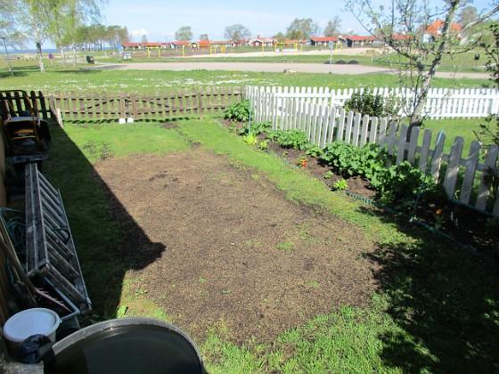 Bakgården Här sådde jag gräs för drygt en vecka sedan. 2020-05-04 Bakgården_0022 Granudden Färjestaden Öland