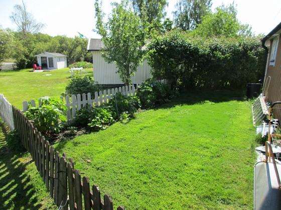 Bakgården Äntligen har jag lyckats med min gräsmatta! Här är nysått gräs i år, pga att min bil stod parkerad här förra året.                                2020-05-27 Bakgården_0024 Granudden Färjestaden Öland