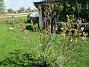 Min Magnolia brukar vara sen, men i år har den varit senare än vanligt.                                (2020-05-27 Magnolia_0045)