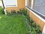 Trädliljor även här, samt Daglilja, praktlysing och Akleja. (2020-05-27 Vinkeln_0062)