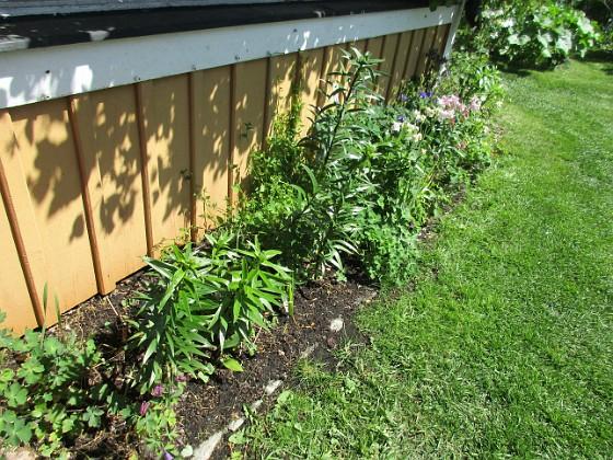 Altanen Jag rensade ogräs här igår. Jag väntar på att mina nysatta Liljor skall komma upp. De som syns är de från förra året. 2020-06-01 Altanen_0018 Granudden Färjestaden Öland