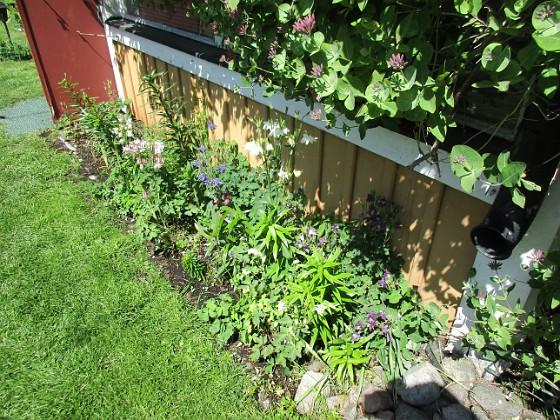 Altanen Jag rensade ogräs här igår. Jag väntar på att mina nysatta Liljor skall komma upp. De som syns är de från förra året. 2020-06-01 Altanen_0019 Granudden Färjestaden Öland