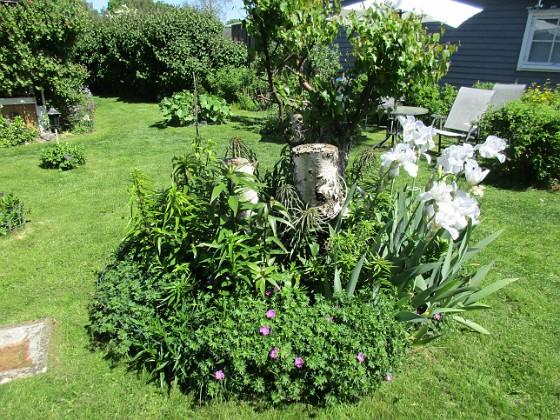Björken Jag förväntar mej många blommor och höga stjälkar på mina Trädliljor som sattes förra våren. 2020-06-01 Björken_0082 Granudden Färjestaden Öland