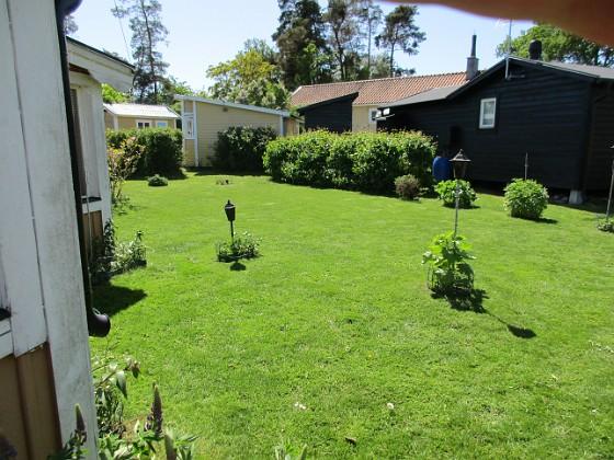 Gräsmattan Gräset är grönt och fint och jag klippte igår. 2020-06-01 Gräsmattan_0007 Granudden Färjestaden Öland