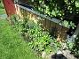 Jag rensade ogräs här igår. Jag väntar på att mina nysatta Liljor skall komma upp. De som syns är de från förra året. (2020-06-01 Altanen_0019)