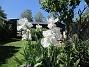 Dessa Trädgårdsiris, Iris Germanica, fick jag igår binda upp pga den hårda blåsten. (2020-06-01 Iris Germanica_0075)