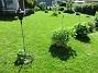 Granudden Det börjar bli lite gult i min nysådda gräsmatta. Det kom regn för ett par dagar sedan, 15 mm, men det behövs nog mera.                                2020-06-09 Granudden_0046