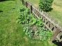 Staketet Stockrosorna vid staketet växer sakta i år tycker jag. 2020-06-09 Staketet_0048