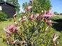 Magnolia                                 2021-05-24 Magnolia_0002c