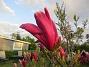 Magnolia                                 2021-05-24 Magnolia_0017b