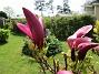 Magnolia                                 2021-05-24 Magnolia_0018