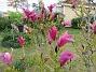 Magnolia                                 2021-05-24 Magnolia_0021