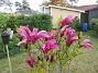 Magnolia                                 2021-05-24 Magnolia_0024