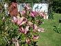 Magnolia                                 2021-05-29 Magnolia_0036