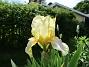 Iris (2021-06-02 Iris_0001)